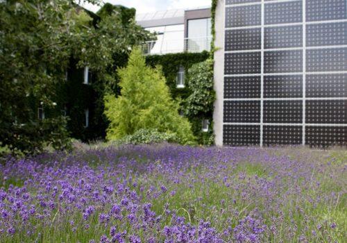 Lavendel  hoch Photovoltaik Stadthalle Wien
